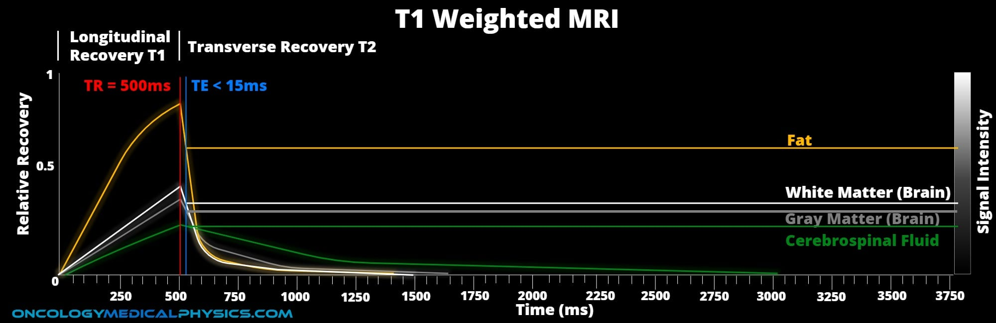 T1 weighting TE and TR MRI diagram