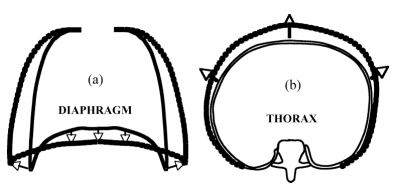 During inhalation the diaphragm is moved downward and the rib cage is moved forward. Source: AAPM TG-76, figure 3.